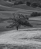 4-20 Yolo Land and Cattle Landscapes_N5A2809-Edit