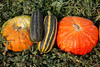 Durst Organics - Baker Seed-5119