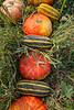 Durst Organics - Baker Seed-5122