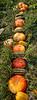 Durst Organics - Baker Seed-5120