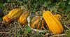 Durst Organics - Baker Seed-5082