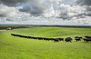 Moving Cattle-
