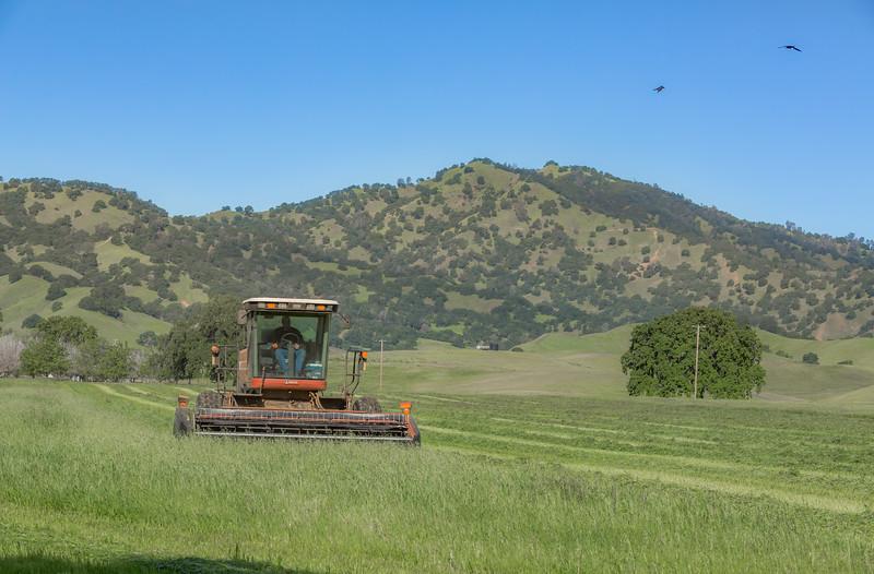 Cutting Rye Grass-2