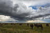 Clouds and Cattle
