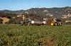 Rominger Harvest-