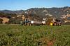 Rominger Harvest 3-