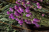 TSL Flower Agrranging-0616