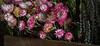 TSL Flower Agrranging-0570
