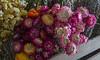 TSL Flower Agrranging-0613