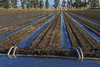 Yolo County Realty Sunflower_Irrigation_2315IMG_2315_103