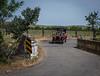 Yolo Land & Cattle Car Tour_N5A2510