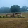 Bill's Pasture