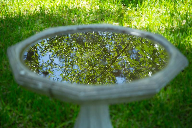 Bird Bath Reflection