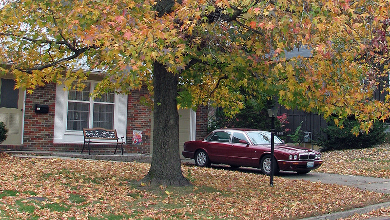 November 9, 2008:  The fall colors were beautiful in our neighborhood in Columbia.  I really like the way the Carnival Red paint of the Jaguar looks against the multi-colored leaves in the yard.