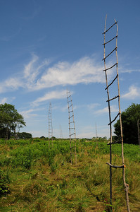 """Thirteen Orphan Field Ladders"" (wood and wire, 2009) by Jim Coates.   Photo by Andy Wilson."
