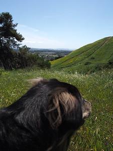 2014 05 01 Road to Ashland & Shasta2 144
