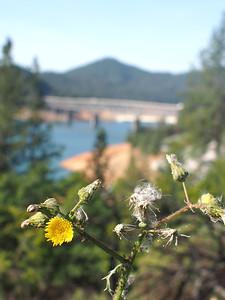 2014 05 01 Road to Ashland & Shasta2 45