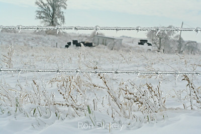 Ice Covered Rural Countryside