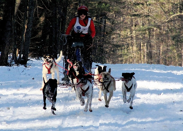 A team competing in the six-mile race heads out of the Appleton Farms portion of teh course and back toward Cutler Road during the Myopia Sled Dog races Saturday. Dan Ryan/Staff photo.