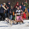 Spectators cheer on a racer in the One-Dog Junior 200-yard race during the Myopia Sled Dog races Saturday. Dan Ryan/Staff photo.