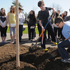 Danvers:<br /> Holten Richmond Middle School 6th graders Kenneth Dunn, center, and Trevor Hathaway, right,  helped plant the Green Mountain Sugar Maple donated by the Danvers Garden Club at the The Arbor Day Celebration held at the school. Many students helped shovel the dirt to plant the tree.<br /> Photo by Ken Yuszkus/The Salem News, Friday, April 26, 2013.