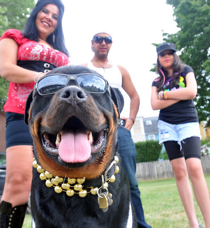 """Chrissy Derby, left, Ruben Cunha, and Meghan Derby of Salem dressed up as members of the Jersey Shore along with their dog Amboss. Sunday's Heritage Days Dog Show theme was """"Is Your Dog a Reality Show Star?""""  photo by Mark Teiwes / Salem News"""