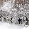 Salem: A pedestrian walks along Washington Street past the snow coated trees during the snowstorm on Monday morning.<br /> Photo by Ken Yuszkus/Salem  News, Monday,  December 27, 2010.
