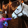 Ken Yuszkus/Staff photo: Ipswich: Kyla Manninen, 3, of Ipswich, is held by her grandmother Marcie Armstrong as Kyla pets Saffeyre at Appleton Farms in Ipswich. Many people attended a family holiday event centered around the Nisse, an elf-like creature who lives in the arns and protects the farmers, animals and crops.
