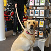 Marblehead:<br /> Steven Luck with his dog Lucy shop at Pawsitively Marblehead pet boutique. The store has unique holiday pet gifts.<br />  Photo by Ken Yuszkus / The Salem News, Wednesday, December 4, 2013.