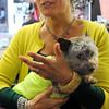 Ken Yuszkus/Staff photo. Karen Davis is the owner of Penelope's Pet Boutique in Salem. She is holding her dog George.