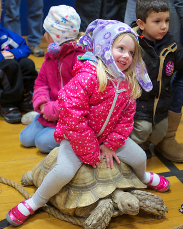 RYAN HUTTON/ Staff photo. A girl catches a ride on a tortoise as part of the Curious Creatures program at the YMCA during the New Year's Eve celebration in downtown Beverly