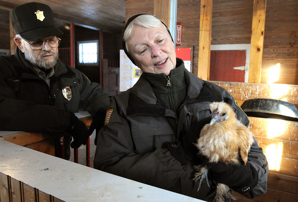 Ken Yuszkus/Staff photo: Danvers:  Joan and David Townley, long-time caretakers at Endicott Park, are retiring. Joan is holding Lily, a chicken,  while inside the Children's Barn at the park.
