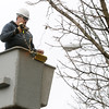 Ken Yuszkus/Staff photo. Salem: Tree Department worker Jimmy O'Brien strings lights on trees  on Essex Street in Salem.