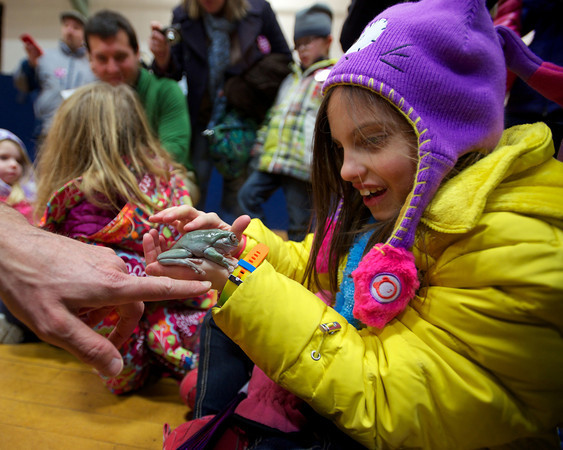 RYAN HUTTON/ Staff photo. Julia Valanzola, 8, pets a tree frog as part of the Curious Creatures program at the YMCA during the New Year's Eve celebration in downtown Beverly