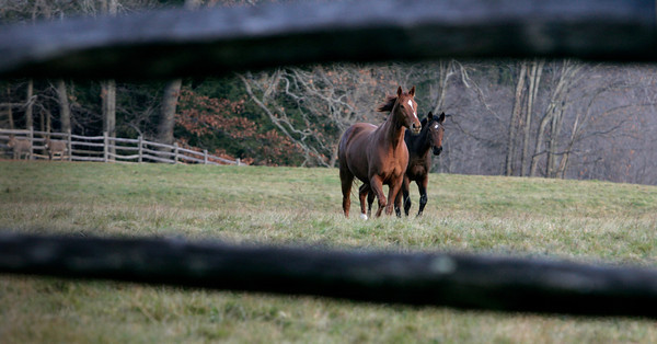 Hamilton:<br /> Two horses are framed by a wooden fence in Hamilton.<br /> Photo by Ken Yuszkus/The Salem News, Monday, November 26, 2012.