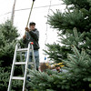 Danvers:<br /> Don Andress stands on a ladder and uses a rake to help Leoncio Vizcaino string Christmas lights on Leoncio's trees in his front yard. <br /> Photo by Ken Yuszkus/The Salem News, Monday, November 13, 2012.