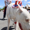 Peabody: Polly Leis walks with a great dane from the Service Dog Project at a Brooksby Village parade celebrating the 4th of July holiday.  photo by Mark Teiwes / Salem News