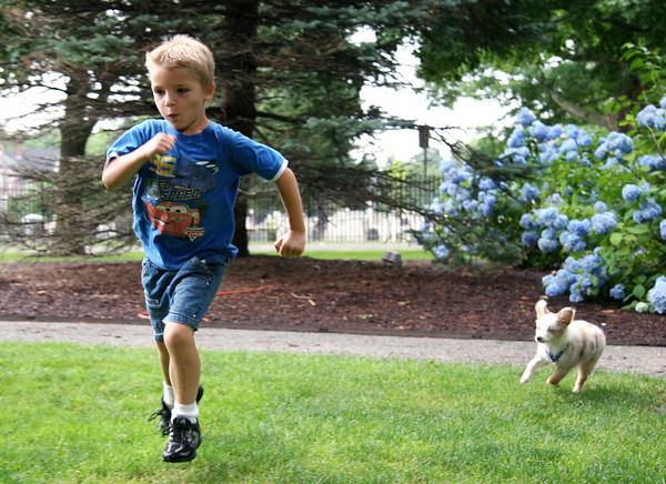 Beverly: Darian Motto, 6, races Luka to a tennis ball while trying to teach the puppy how to fetch in Beverly Common on Wednesday. Photo by Mary Catherine Adams/Salem News.