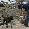 Beverly: Musket waits for his owner, Dan Maclean,  to throw a stick on Dane Street Beach Tuesday.