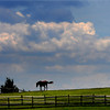 Wenham:<br /> A horse walks along the hilltop as the clouds roll in on a hot humid afternoon on Walnut Road in Wenham.<br /> Photo by Ken Yuszkus / Salem News, Monday, July 15, 2013.