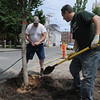 Salem:<br /> Arborist Curtis Dragon, left, and Frank Taormina of the Salem planning department work together to plant a gingko bilbo tree on Palmer Street in Salem. Salem won a national urban forestry grant and is planted 13 trees along Palmer Street in The Point Neighborhood.<br /> Photo by Ken Yuszkus / Salem News, Thursday, June 6, 2013.