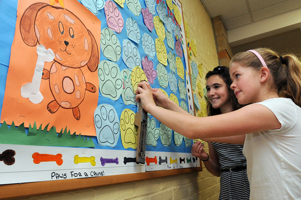 """Beverly:<br /> Fifth-grade Student Council members Abby Brauninger, left, and Leilani Jones prepare to attach """"Dog Paws"""" on the """"Paws for a Cause"""" display in the Cove Elementary School hallway. Cove Elementary School is trying to raise $9,500 to buy a therapeutic service dog to support special education students at the school. Students and families can purchase a """"Dog Paw"""" for $1 as part of the fund-raising campaign.<br /> Photo by Ken Yuszkus/Salem News,  Wednesday May 22, 2013."""