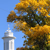 Ipswich:<br /> Leaves turned yellow near the steeple of the United Methodist Church mark the start of autumn..<br /> Photo by Ken Yuszkus, The Salem News,  Tuesday, October 08, 2013.