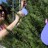 Beverly:<br /> Program director of the Beverly domestic violence unit Zayda Gonzalez places paper tear drops on a tree outside Beverly City Hall. The Beverly Police Department's Domestic Violence Unit later unveiled the tear-drop covered tree display to mark Domestic Violence Awareness Month. Each tear drop represents a victim who has been served by the Beverly domestic violence unit.<br /> Photo by Ken Yuszkus, The Salem News, Tuesday, October 01, 2013.