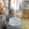 Topsfield:<br /> Witchcraft Heights Elementary School 2nd grader Samantha Chasse looks at one of the rabbits on exhibit at the Topsfield Fair<br /> Photo by Ken Yuszkus, The Salem News,  Wednesday, October 09, 2013.