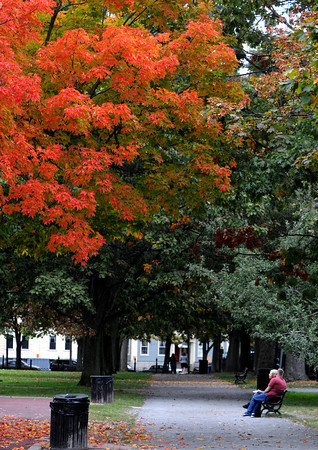 Salem:<br /> Some of the leaves turn color in Salem Common.<br /> Photo by Ken Yuszkus, The Salem News,  Wednesday, October 16, 2013.