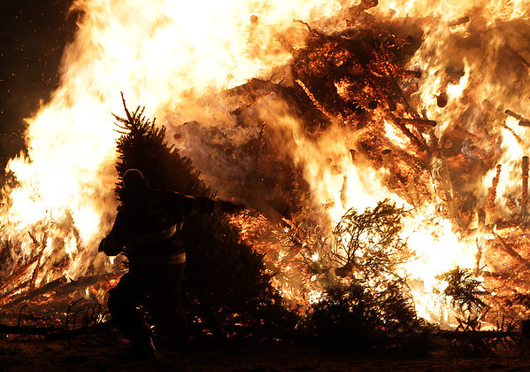 Salem firefighter Marty Butler drags a tree towards a huge pile of burning Christmas Trees on Dead Horse Beach. David Le/Salem News