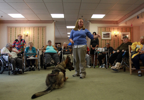 Ven, a German Shepard Guide Dog from Fidelco Guide Dog Foundation sits patiently as trainer Laura DiMaio talks about Fidelco at the Essex Park Rehabilitation Center on Tuesday afternoon. David Le/Staff Photo