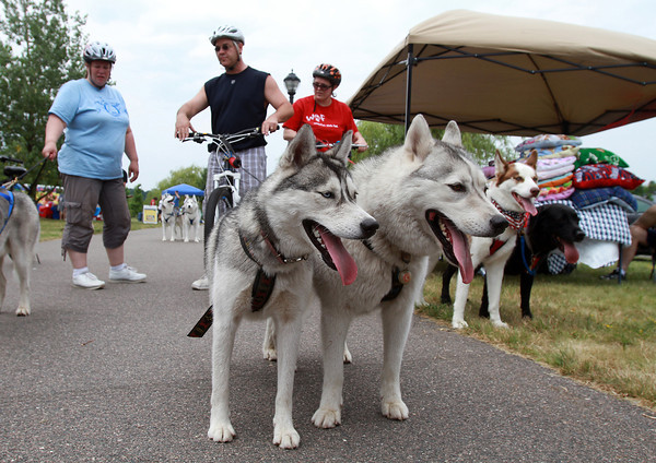 Sophie, left, and Louie, two huskies from Boston Snow Dogs rest following a Dog Sled demonstration at a fundraiser for Salem Play Areas for Canine Exercise, at Leslie's Dog Retreat Park in Salem. David Le/Staff Photo