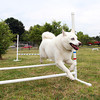 Max, a Siberian Husky from the Massachusetts Union for Siberian Huskies (MUSH), jumps over a hurdle during a skills demonstration at Leslie's Retreat Dog Park in Salem on Saturday as part of a fundraiser for Salem Play Areas for Canine Exercise. David Le/Staff Photo